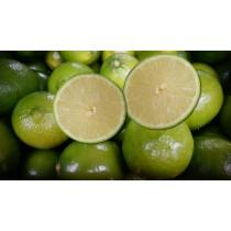 南投A級無籽檸檬 | 特級無子檸檬 | 特級無籽檸檬(20斤裝)&